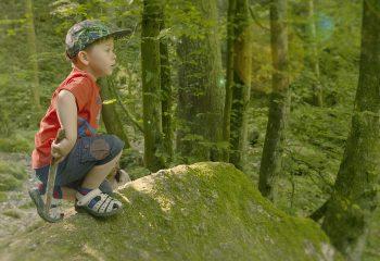 Kind Wald Stein